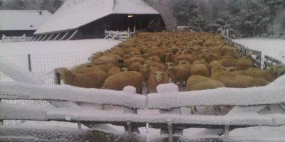 schaapskooi sneeuw 2